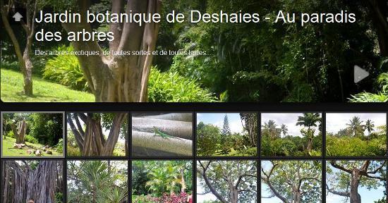 Guadeloupe - Jardin botanique de Deshaies